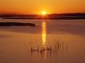 手賀沼の朝