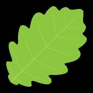 f_leaf624