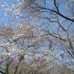 写真:あけぼの山公園