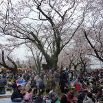 写真:あけぼの山公園2