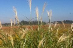 秋の手賀沼